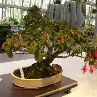 tipps und anleitungen bonsaiwelt. Black Bedroom Furniture Sets. Home Design Ideas